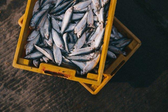 ryby v bednách