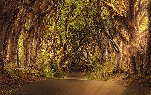 silnice mezi stromy